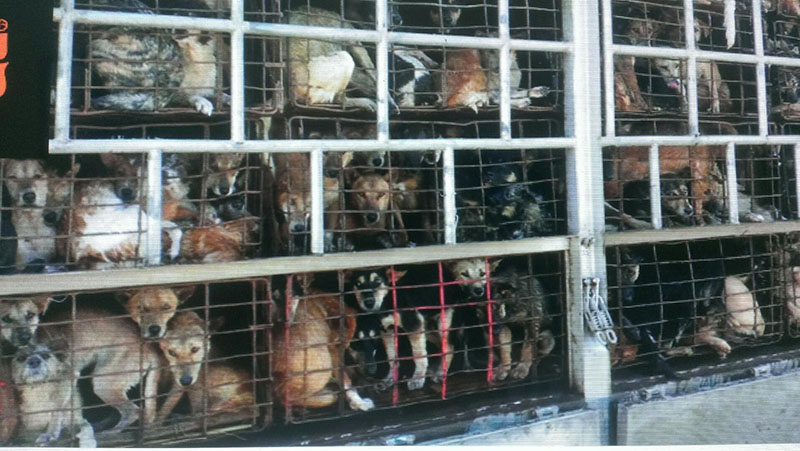 Help Us End The Dog Meat Trade